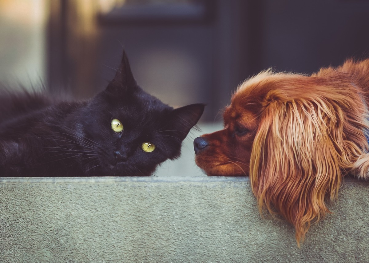 For some people, losing a pet is like losing a family member.