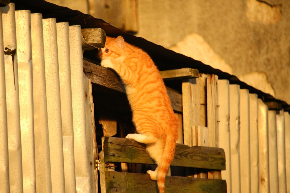 Where is this curious cat going? He could be looking for trouble if he's not careful!
