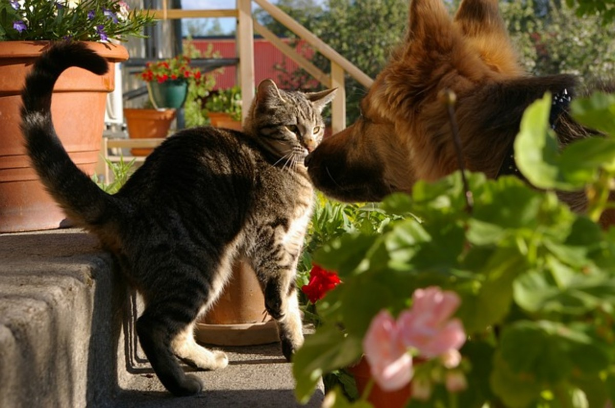 Many, but not all, cats and dogs have story relationships, which helps to explain the saying  'raining cats and dogs'.