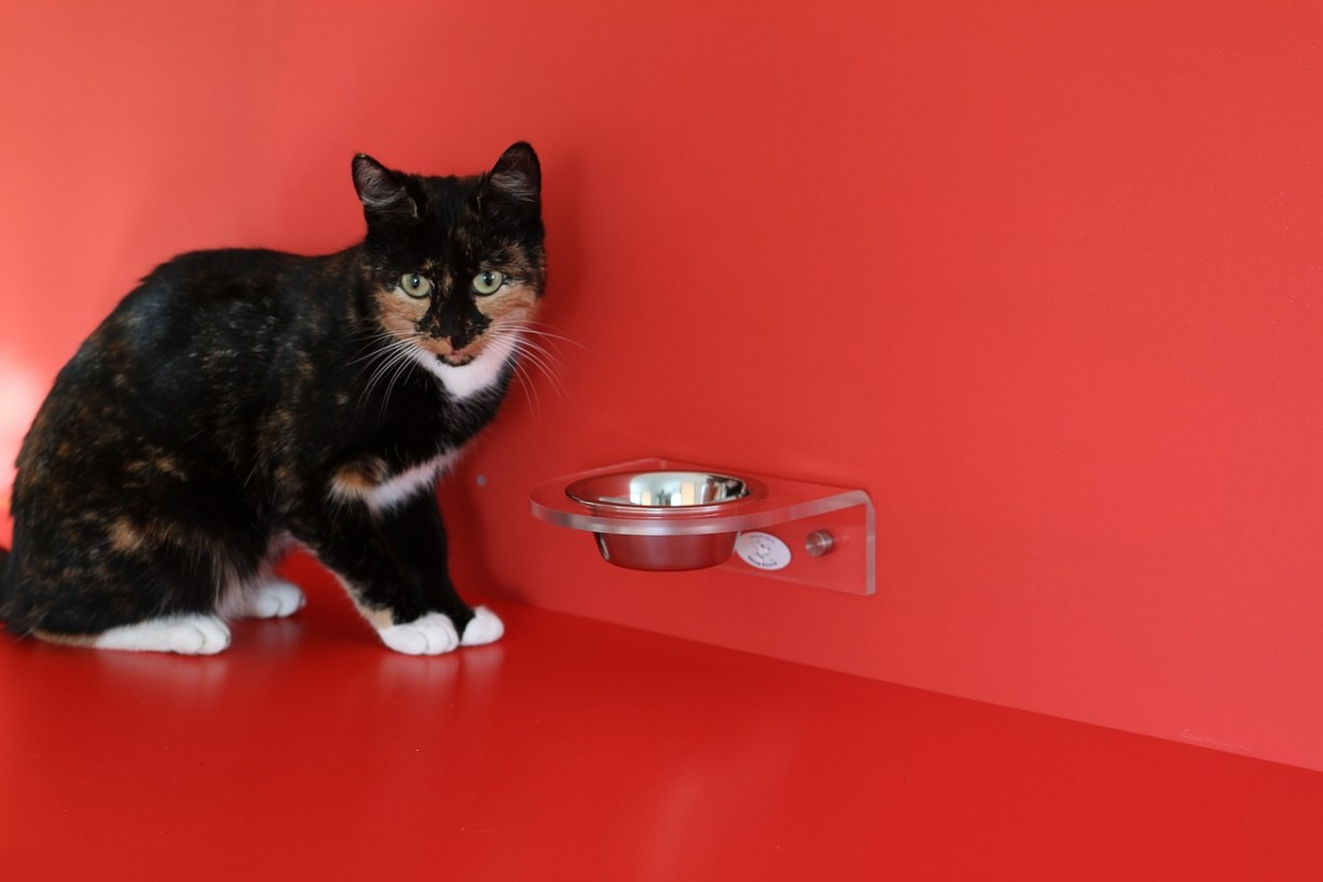 Good diet will keep cat's skin healthy