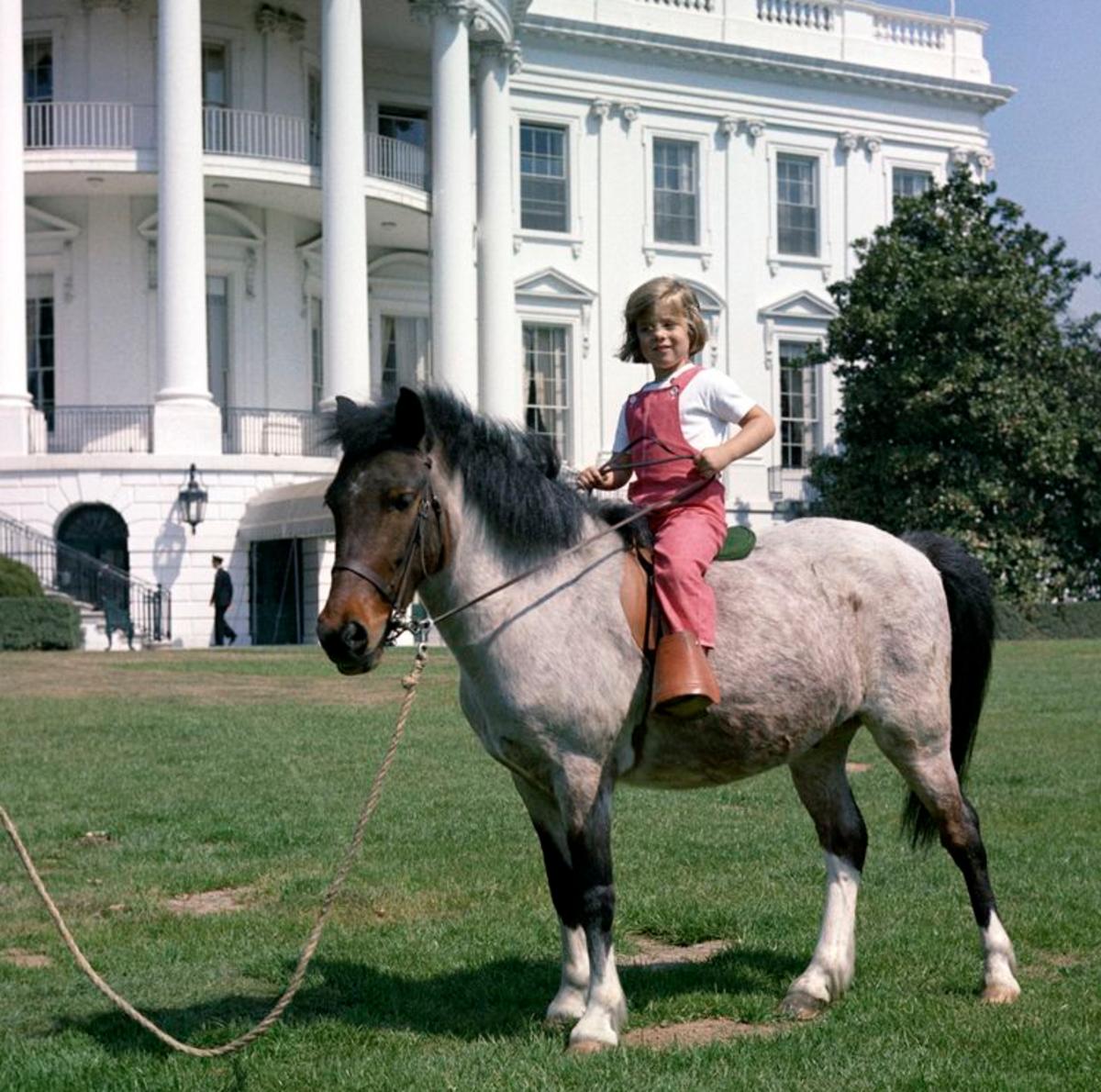 Caroline Kennedy's pony, Macaroni.
