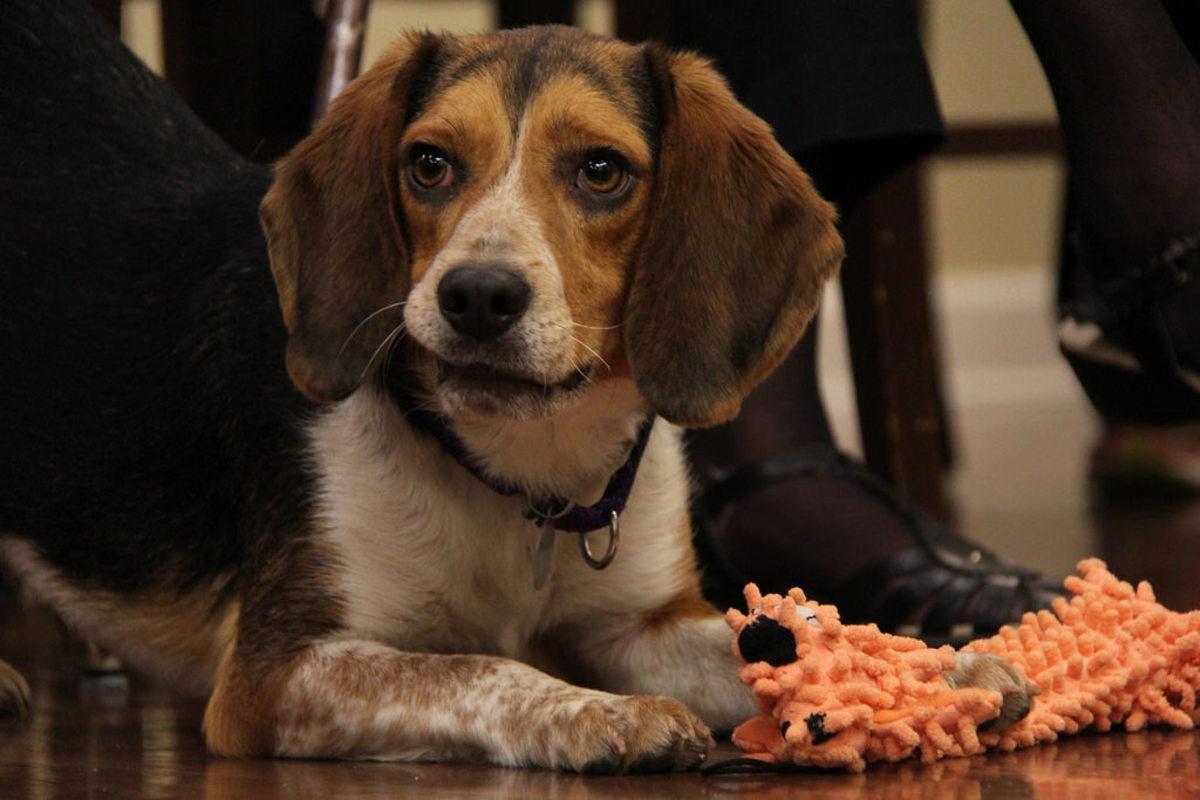 Shaking or Trembling Dog: How to Distinguish Medical Emergencies