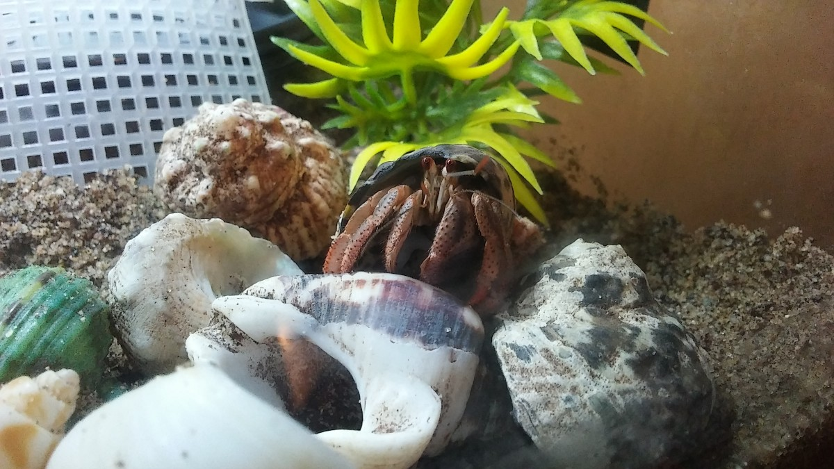 Crawling around on a shell pile.