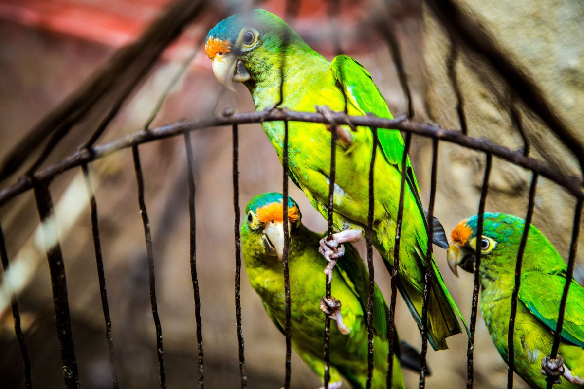 Parrot fever is a occupational work hazard for some and another way your pet can make you sick.