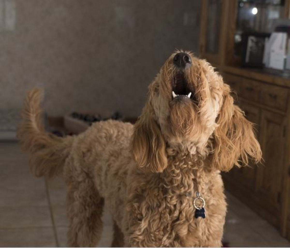 Barking at the TV may be your dog's way of responding to a trigger on screen.