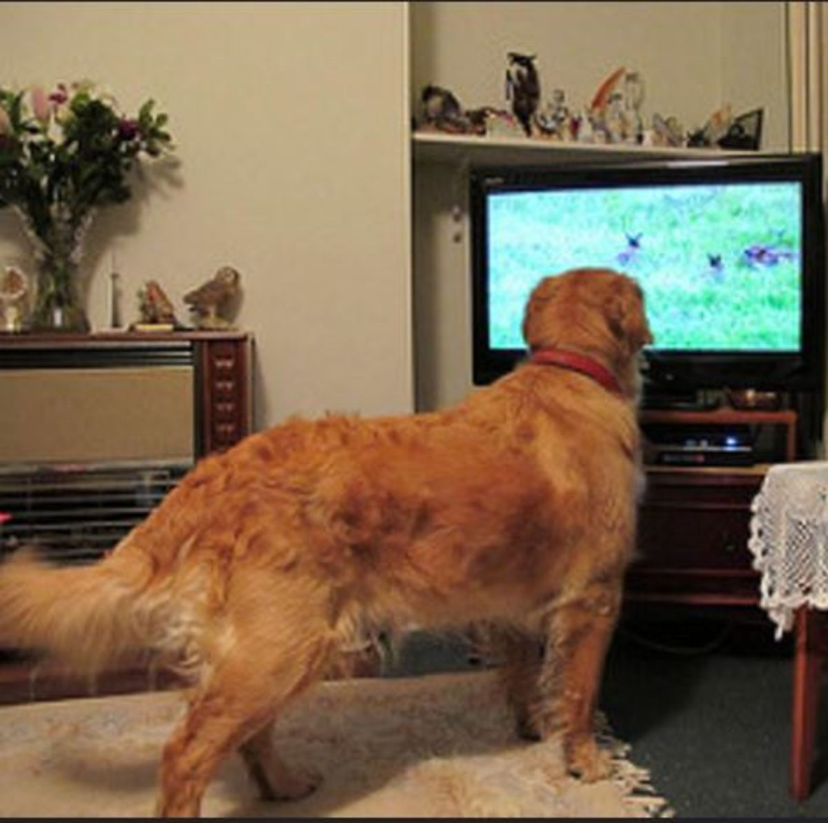 Dogs can see TV. Scrabbles goes crazy whenever there are animals on screen.