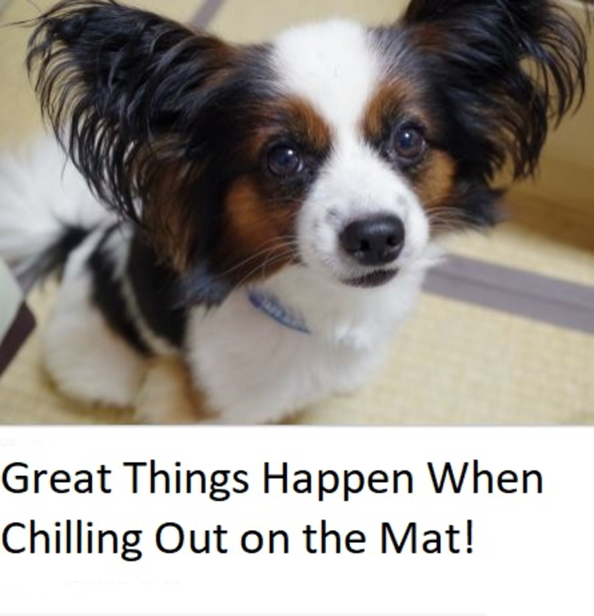 how-to-keep-a-dog-from-barking-at-the-tv