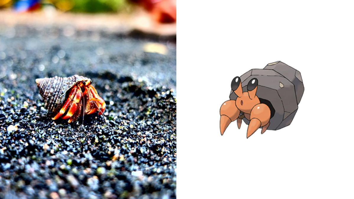 20 Real Pokemon You Can Own As Pets Pethelpful