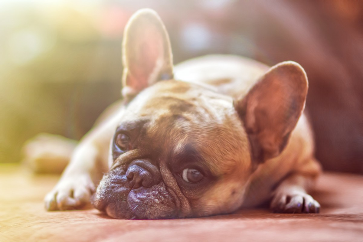 top-5-stinky-dog-grooming-tips