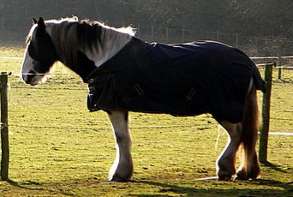 To Blanket, Or Not To Blanket, A Horse