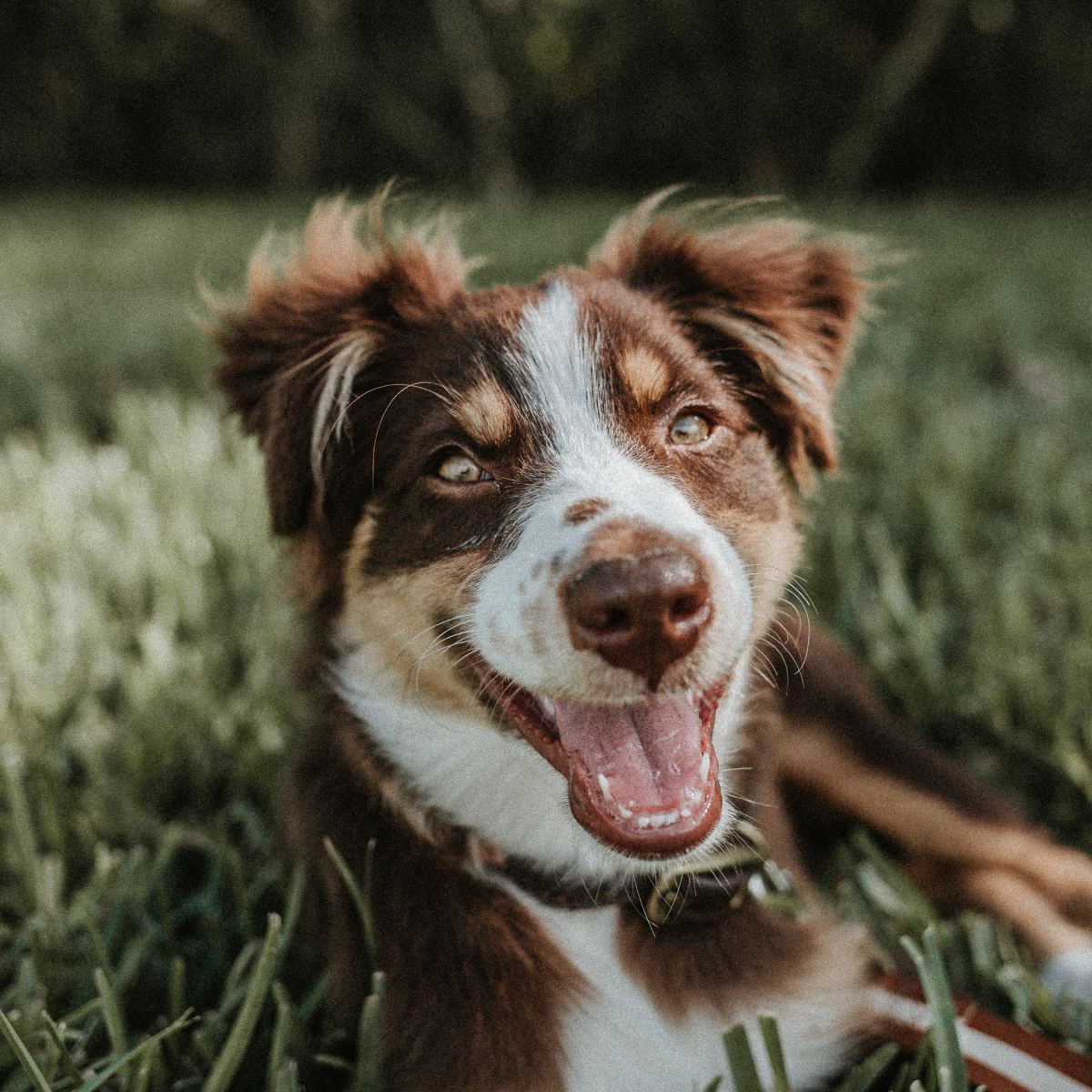 By watching your dog's mouth, you can discover some very clear messages as to what they are actually trying to tell you.