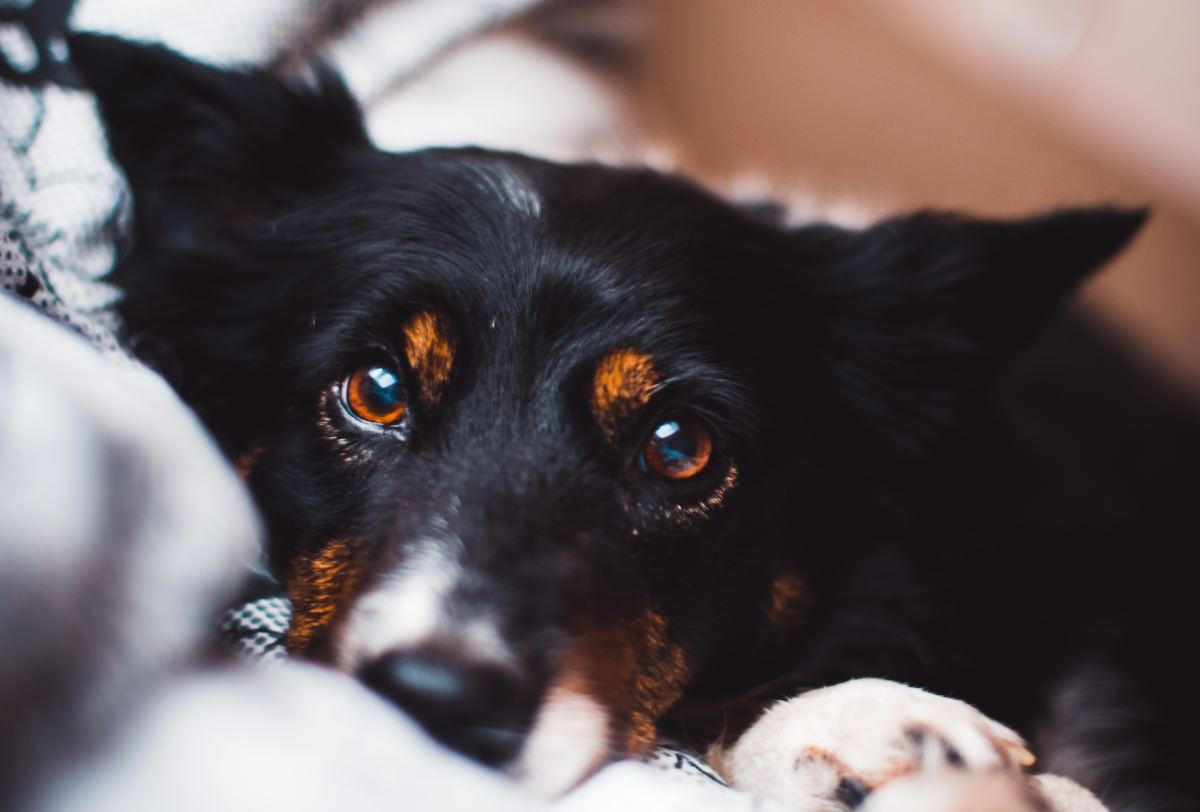 By watching your dog's eyes you can determine what they are really trying to tell you.