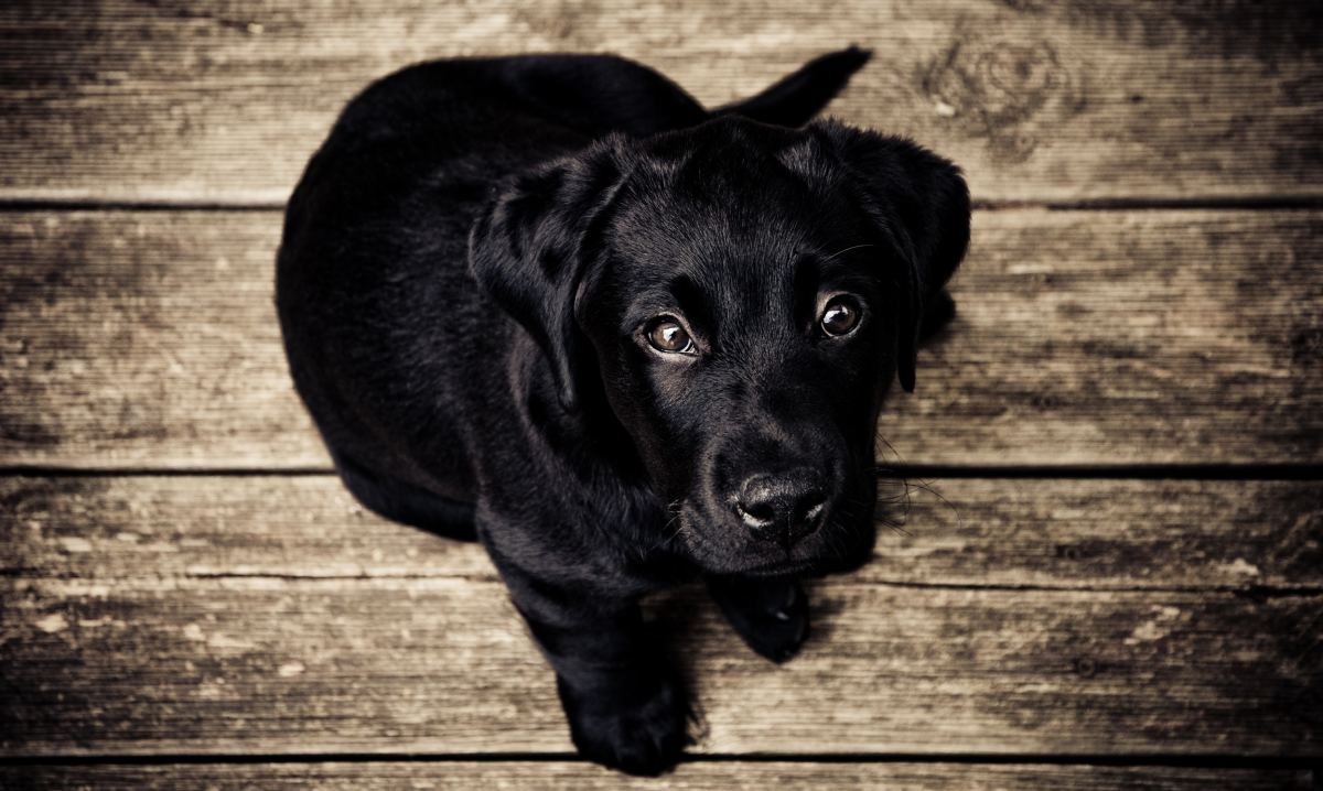 What are the signs of separation anxiety in dogs?