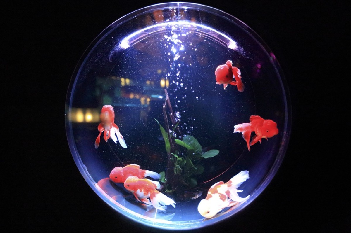 "The traditional ""goldfish bowl,"" while pretty to look at, is not enough room for your new friend."
