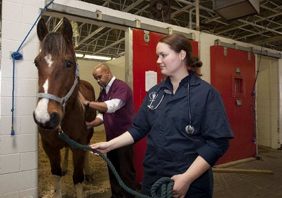 Two equine veterinarians checking on a new patient.