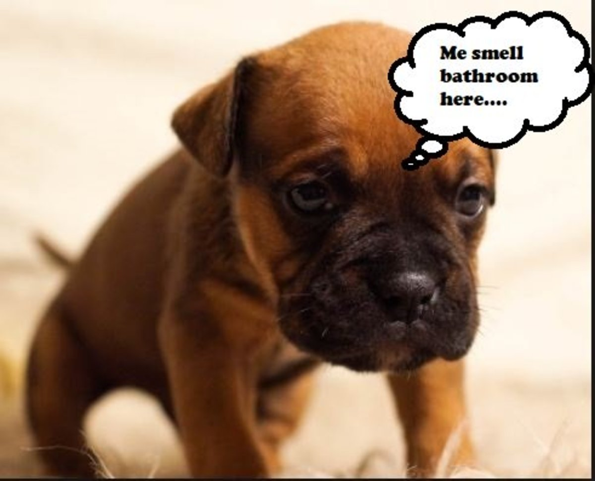 Puppies will be triggered to potty if they detect a potty scent.