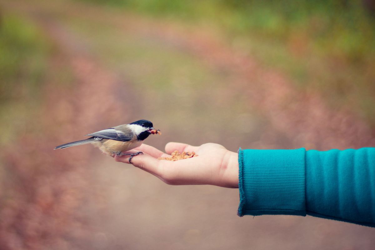 Birds are a good pet for anyone who has monetary concerns.