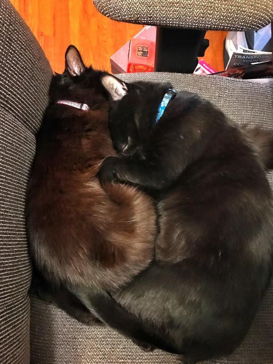 Freyja and Salem snuggling in a kitten cuddle pile. BFFs!