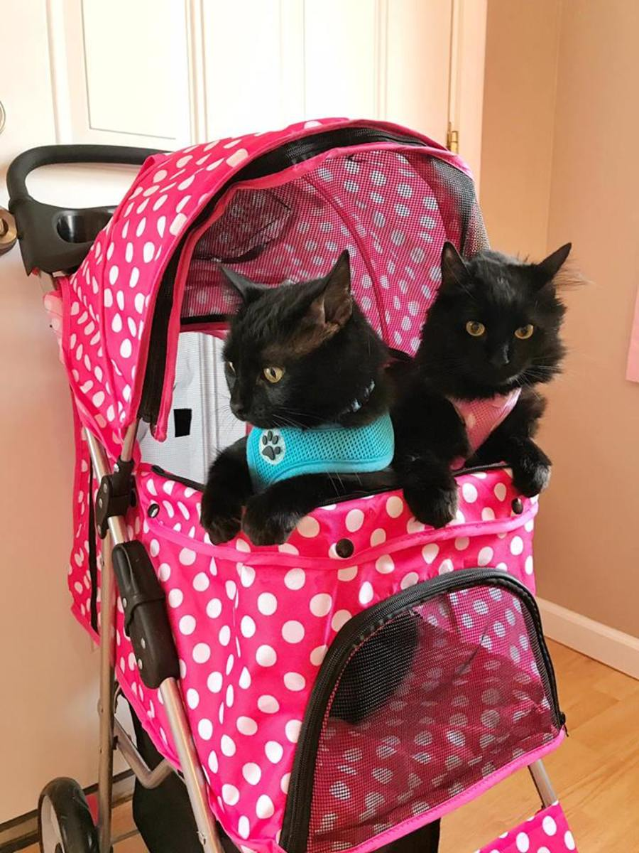 """""""They see me strollin', they hatin'."""" Salem and Freyja in their pink polka-dotted stroller."""