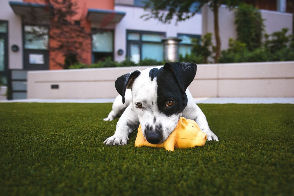 Pet toys are awesome gift ideas!