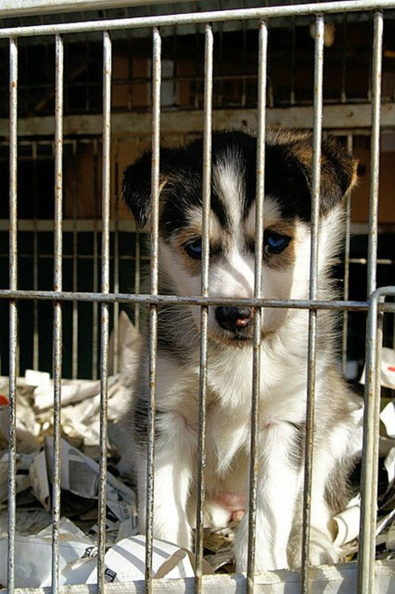 Do not adopt a dog just because he is cute...