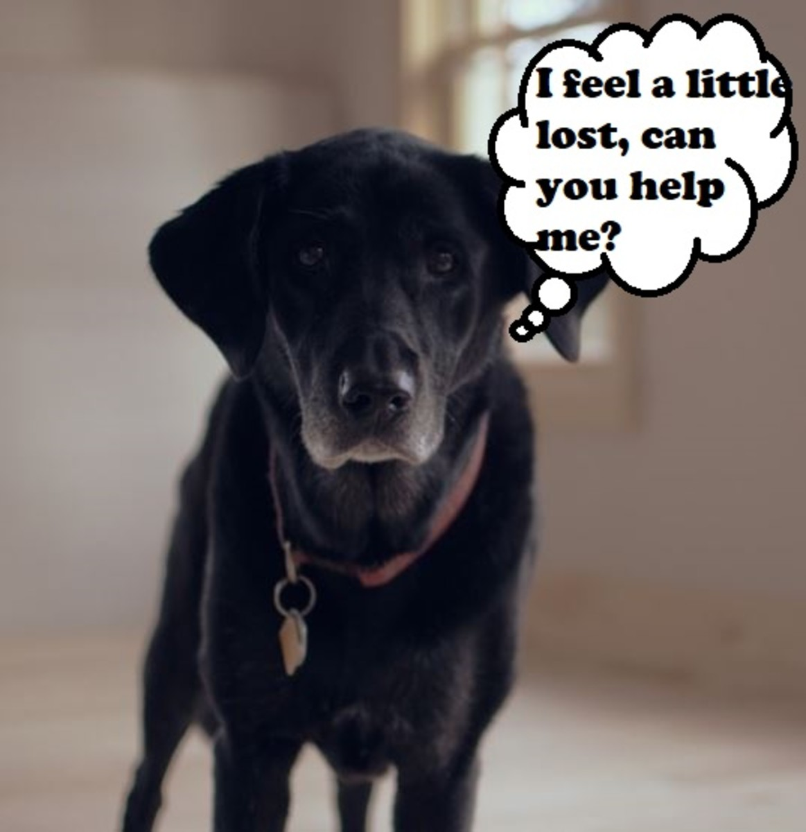 Due to a natural decline in cognitive ability with age, Canine Cognitive Dysfunction Barking often indicates confusion.