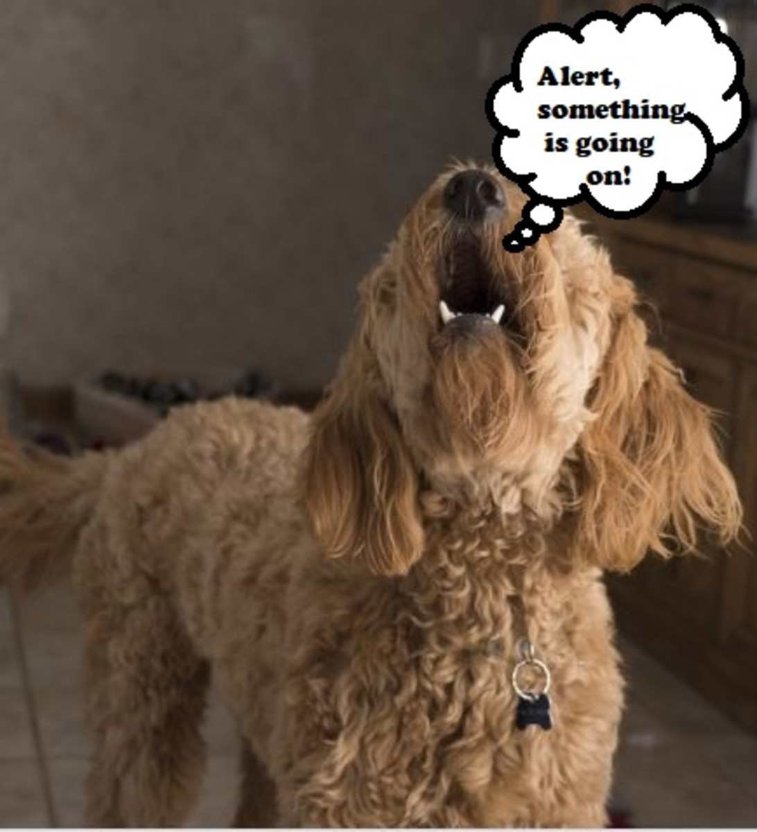 Alarm barks are typically warranted and alert the owner to unusual and concerning circumstances.
