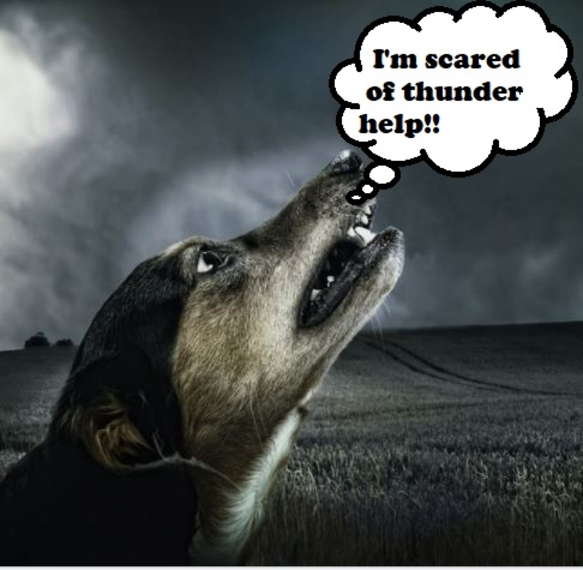 An aversive stimulus triggers fear in dogs. Conditioning causes changes in an organism's body in reaction to stimuli.