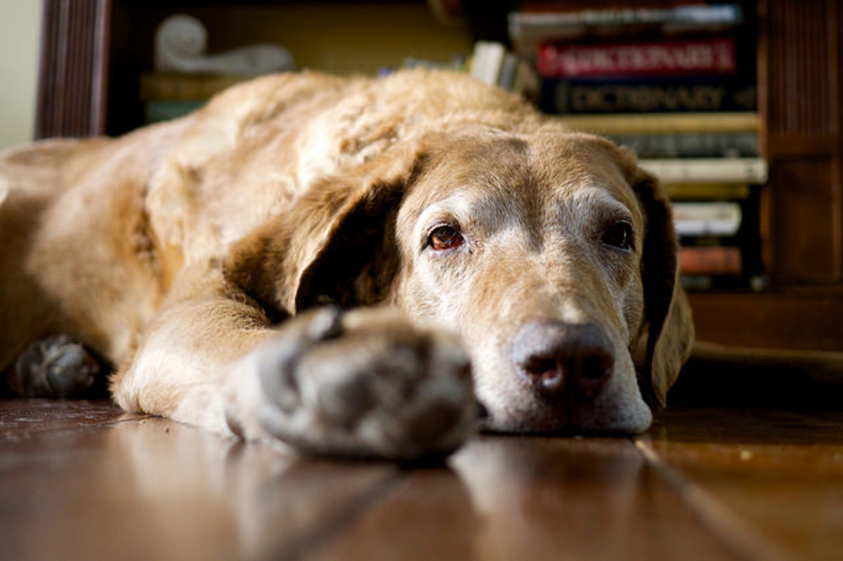 If your senior dog stops sleeping through the night, do something about it. The problem is not going to go away.
