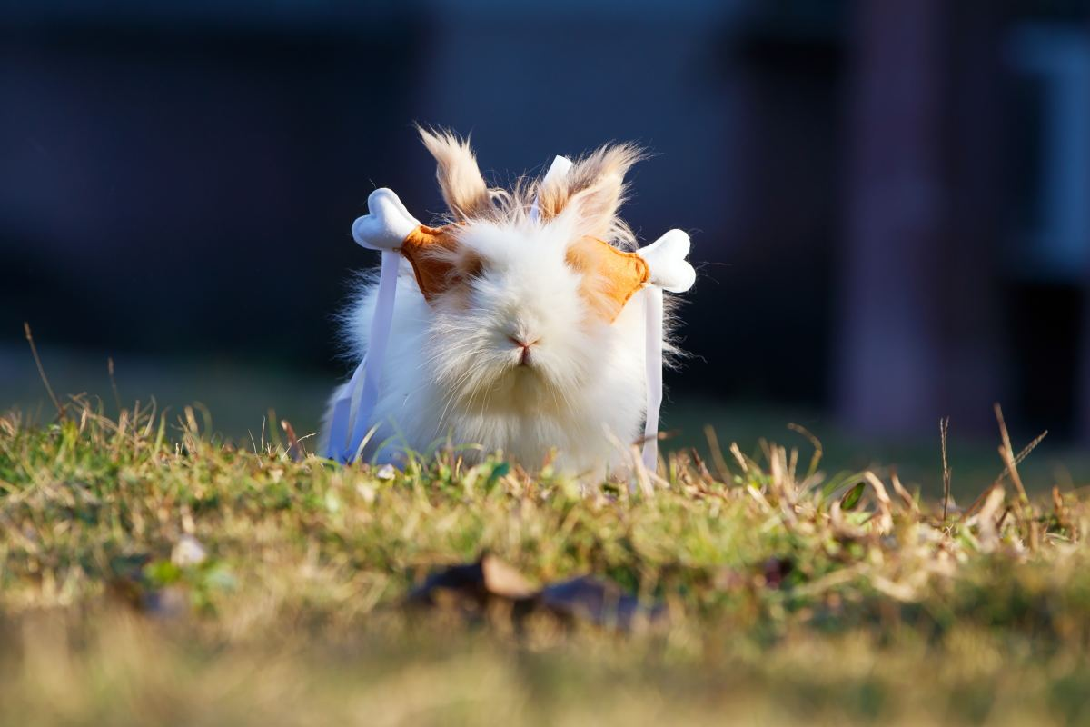 The entertaining antics of the guinea pig is another reason they make for such a good pet.