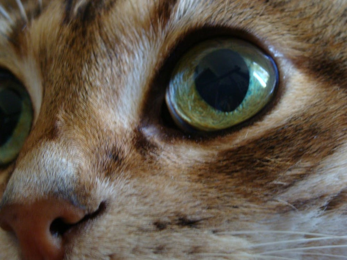 Cat pupils dilate in darkened conditions to let more light into the eye and constrict when there's an excess of light, just like in humans.