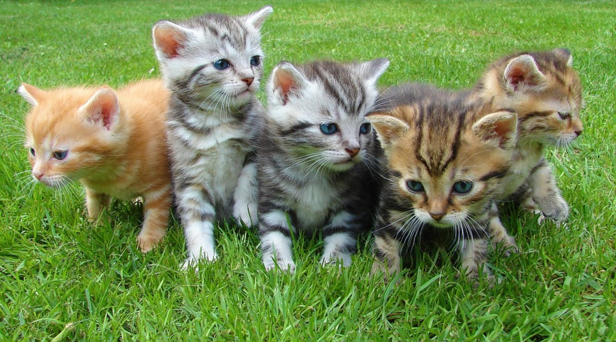 Ahhh, so many cute kittens!