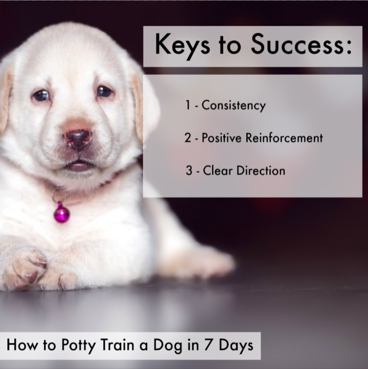 How To Train Your Dog To Pee In One Spot