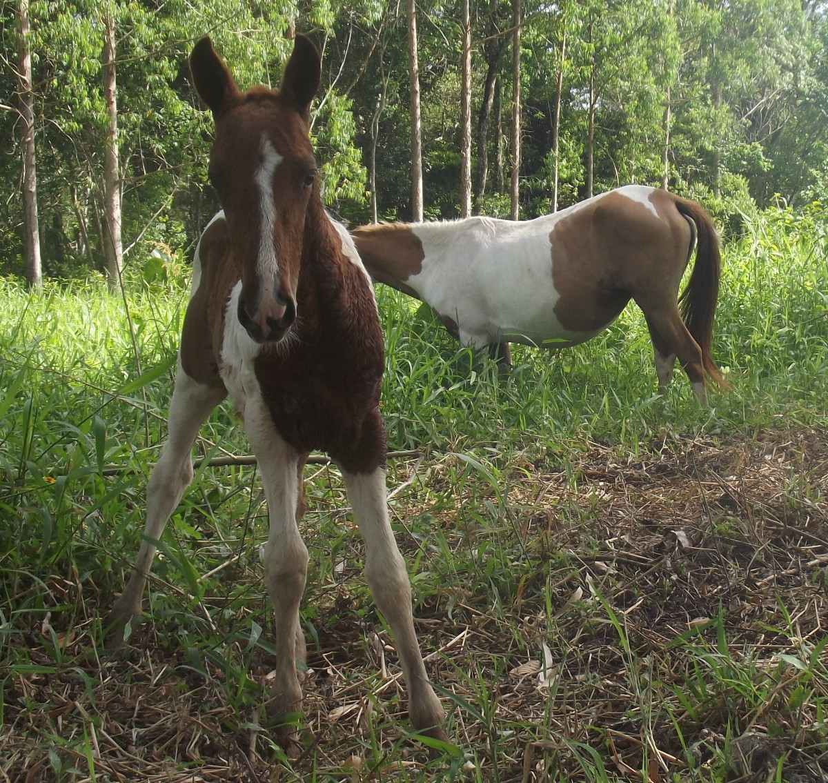 Foals are curious so teach your horses to come when called early if possible.