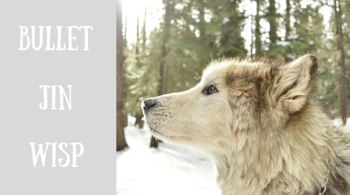 Silver dog coat