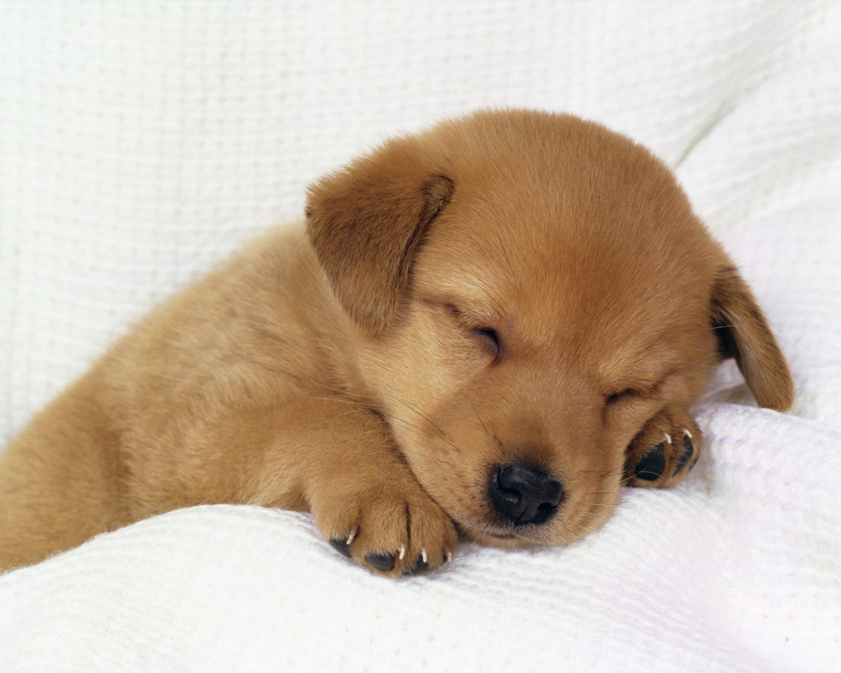 must-haves-when-getting-a-puppy