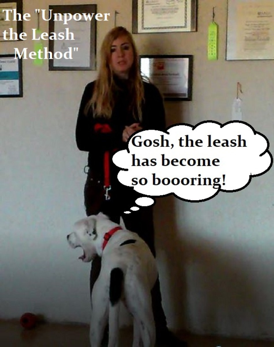 """By conditioning your dog to view the leash as a """"neutral"""" object, you remove the stimulus."""