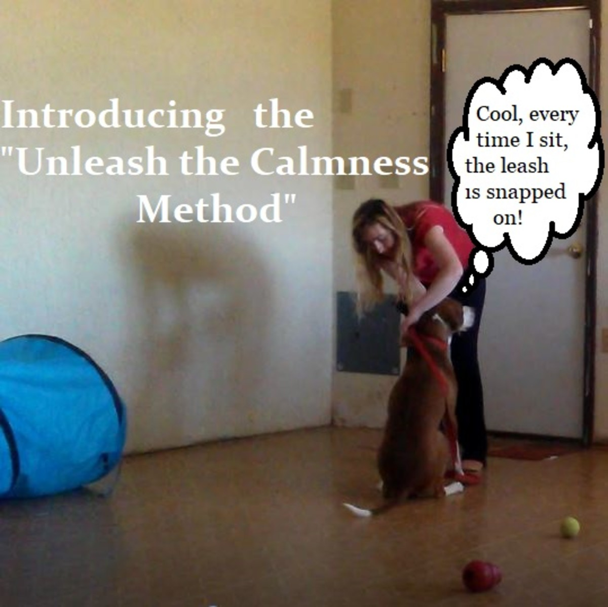 """By teaching your dog to """"sit"""" before a """"clip,"""" you encourage calm behavior."""