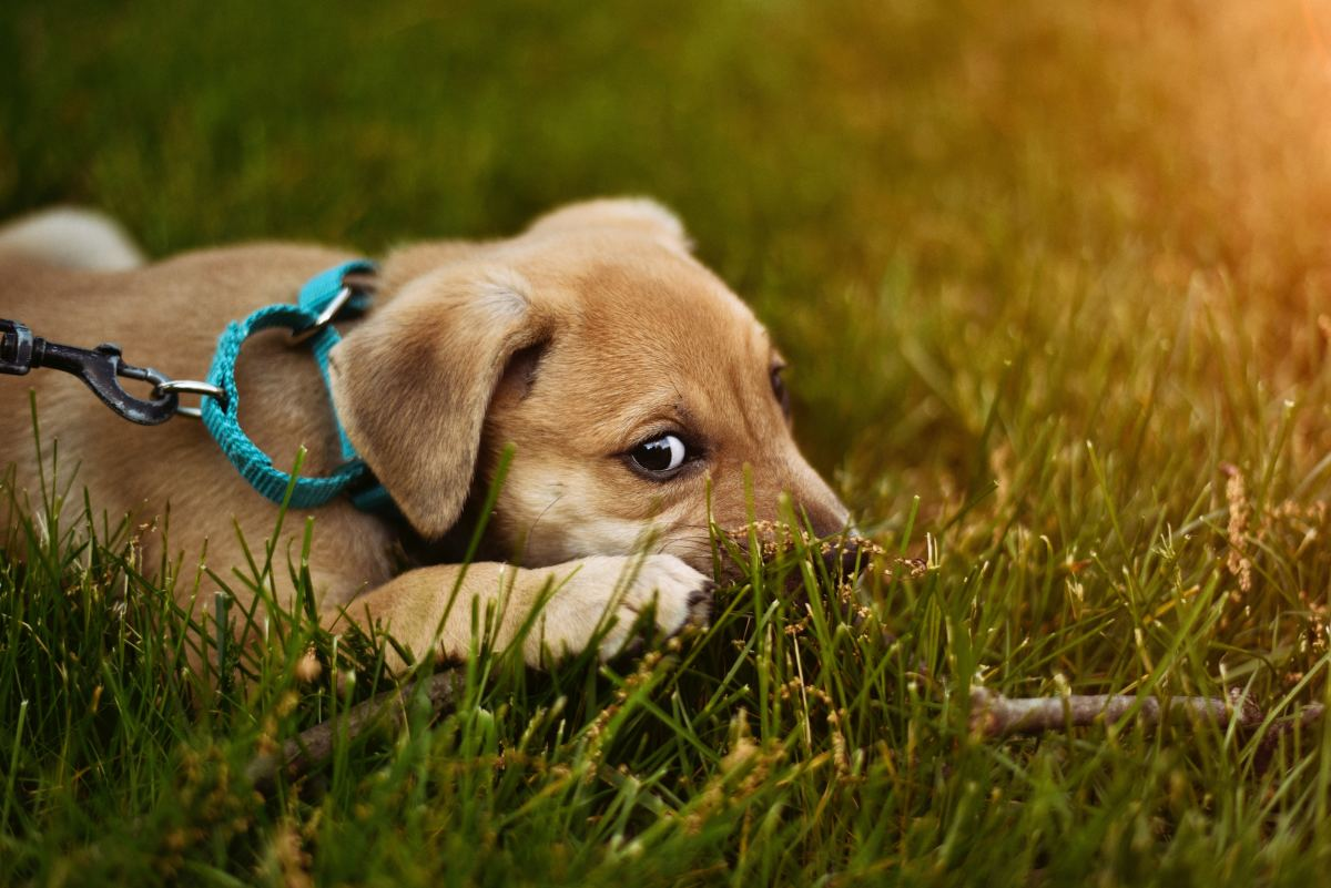 Start neutralizing the association with the leash early.