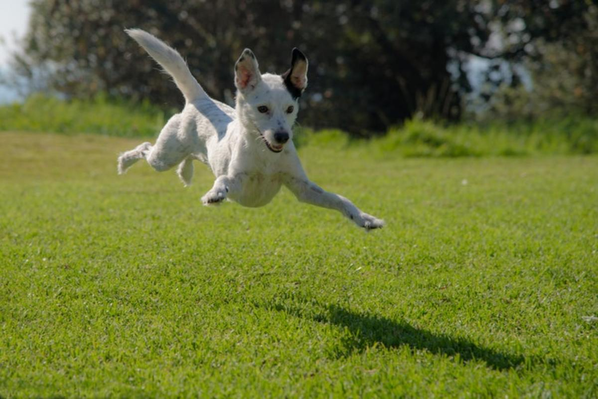 Something as simple as over exertion can cause a dog to throw up and is not of concern unless it becomes on-going.