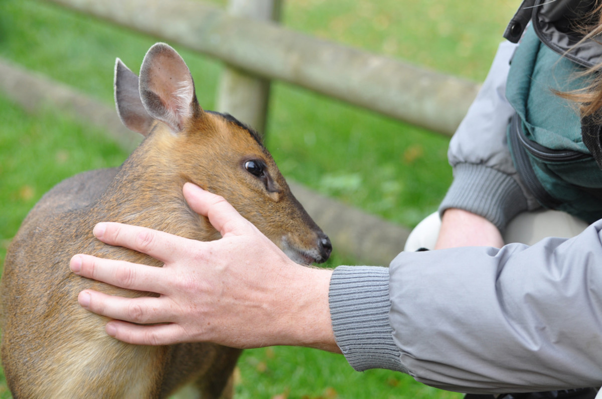 cuddly-and-affectionate-exotic-pets