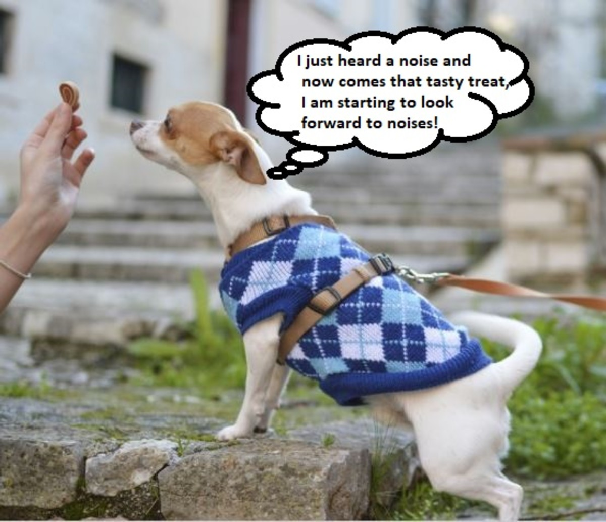 Rewards may help to neutralize fearful situations. Counterconditioning programs are often used to tackle fear in dogs.