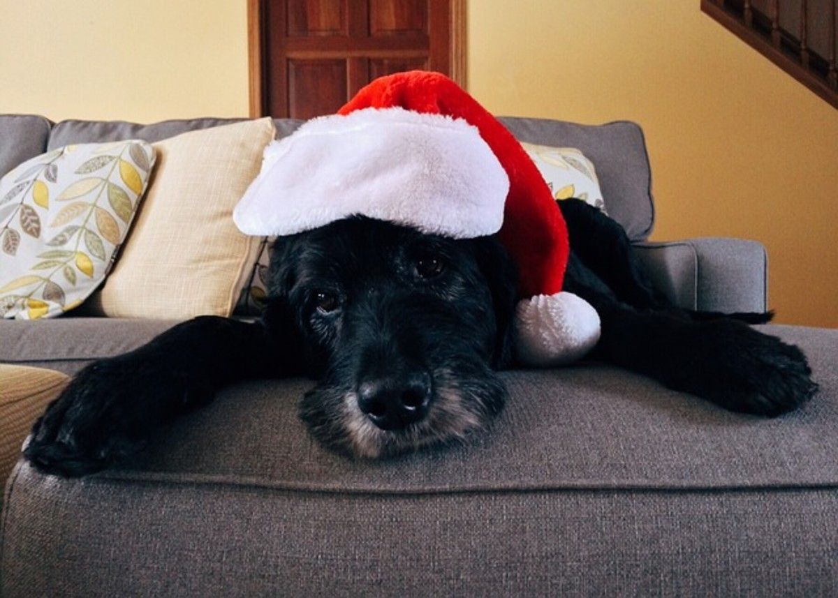 Holiday demand for dog sitting