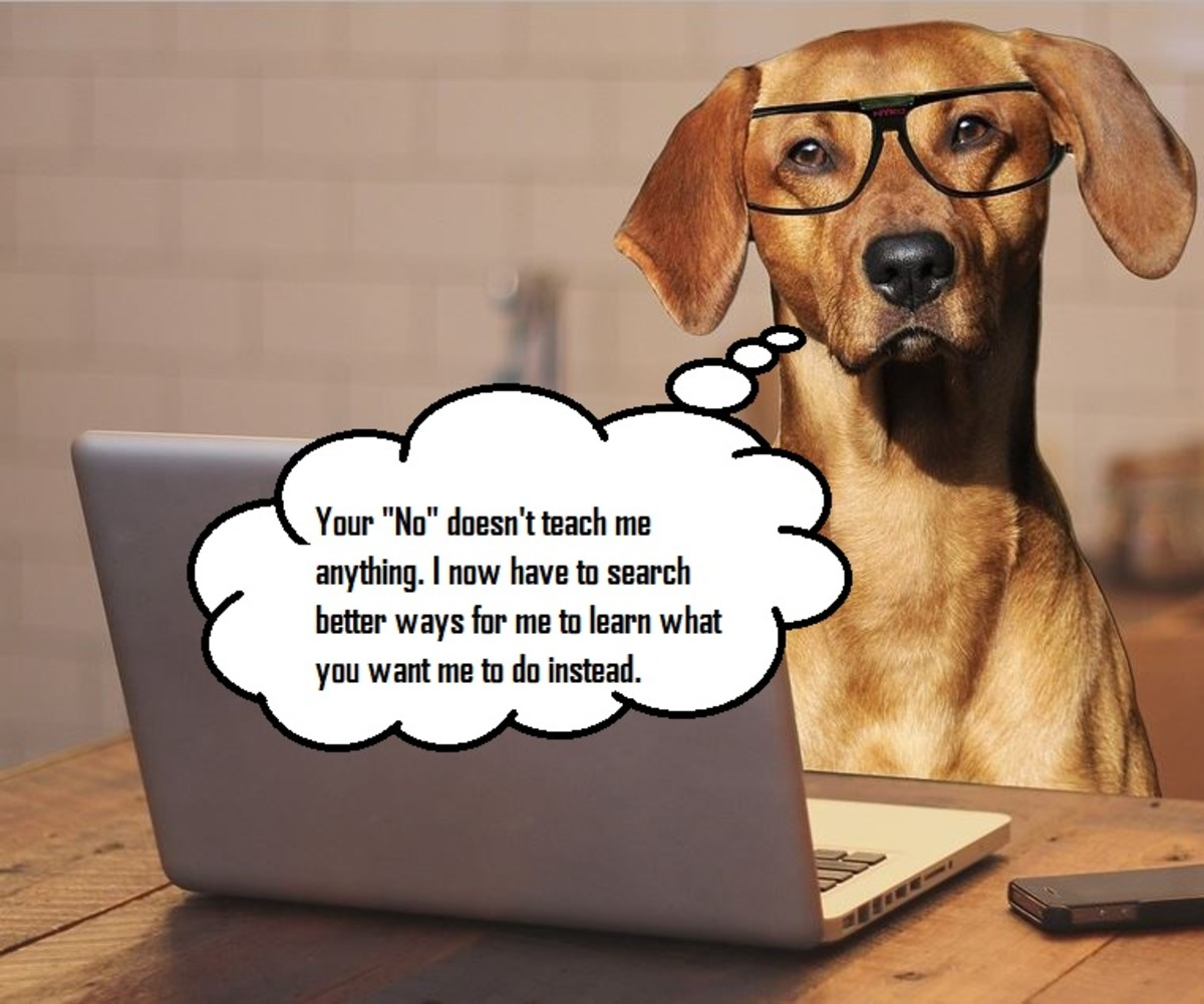 """It's easy for us to assume dogs understand """"no"""" by the way they react to it."""