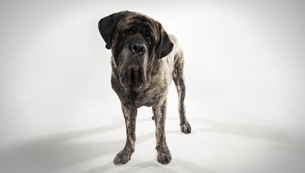 12 Great British Mythological and Literary Names for Your English Mastiff