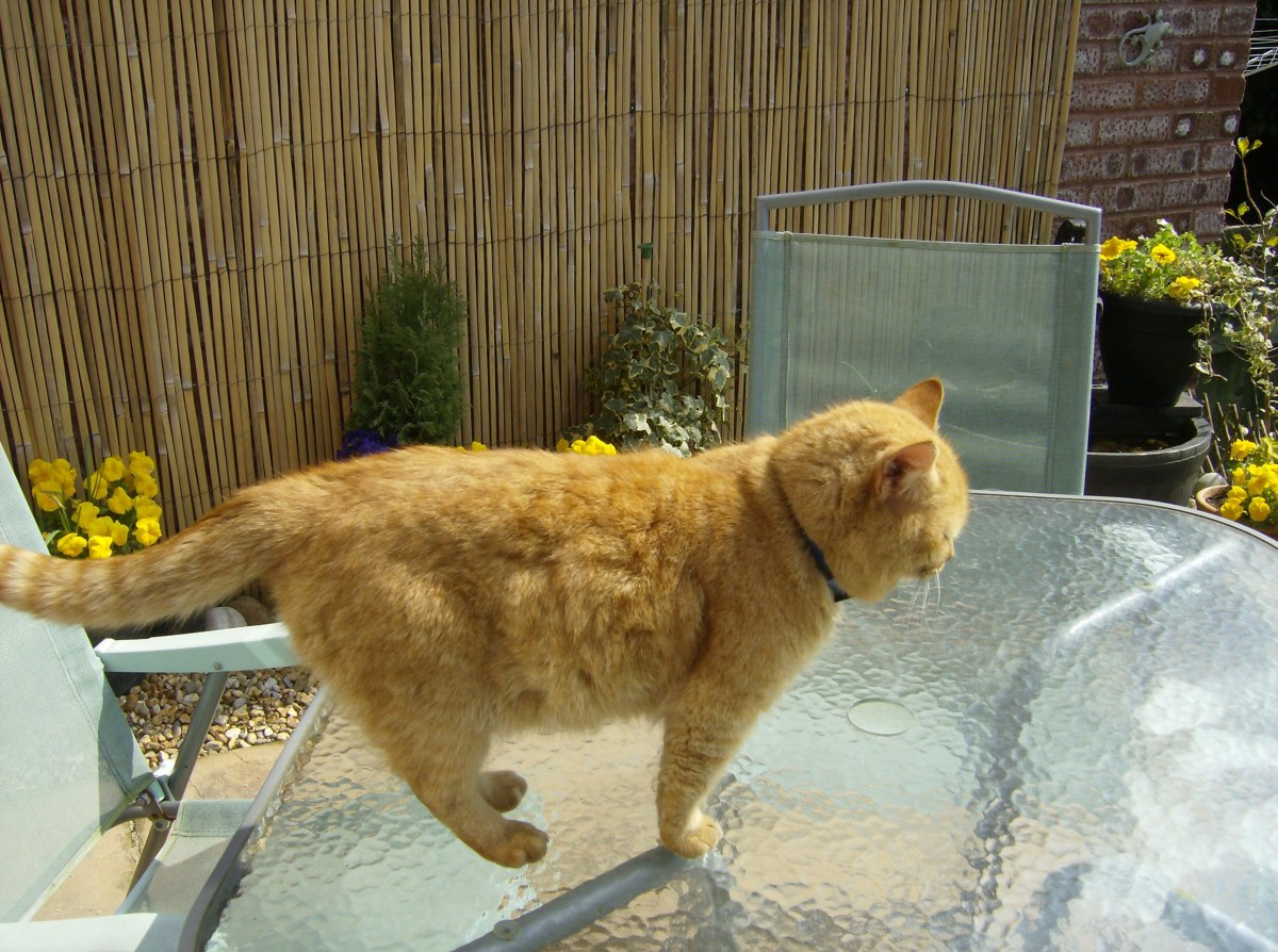 Cat standing on a table.