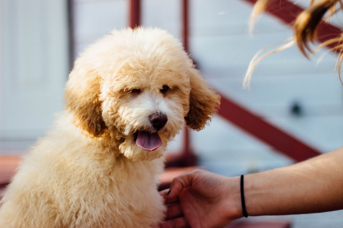 It's not up to you to determine if you're being harsh—it's ultimately up to your dog!