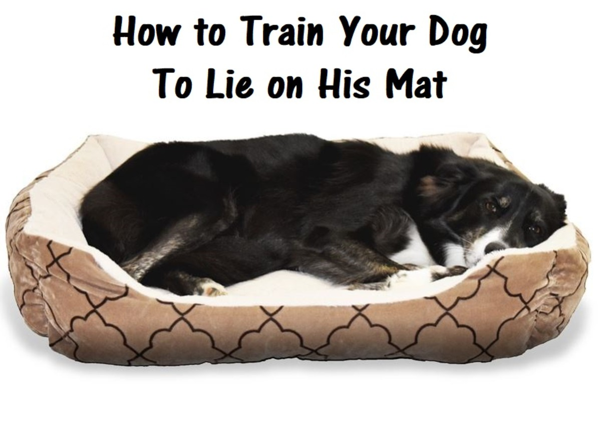 how-to-train-your-dog-to-go-to-mat
