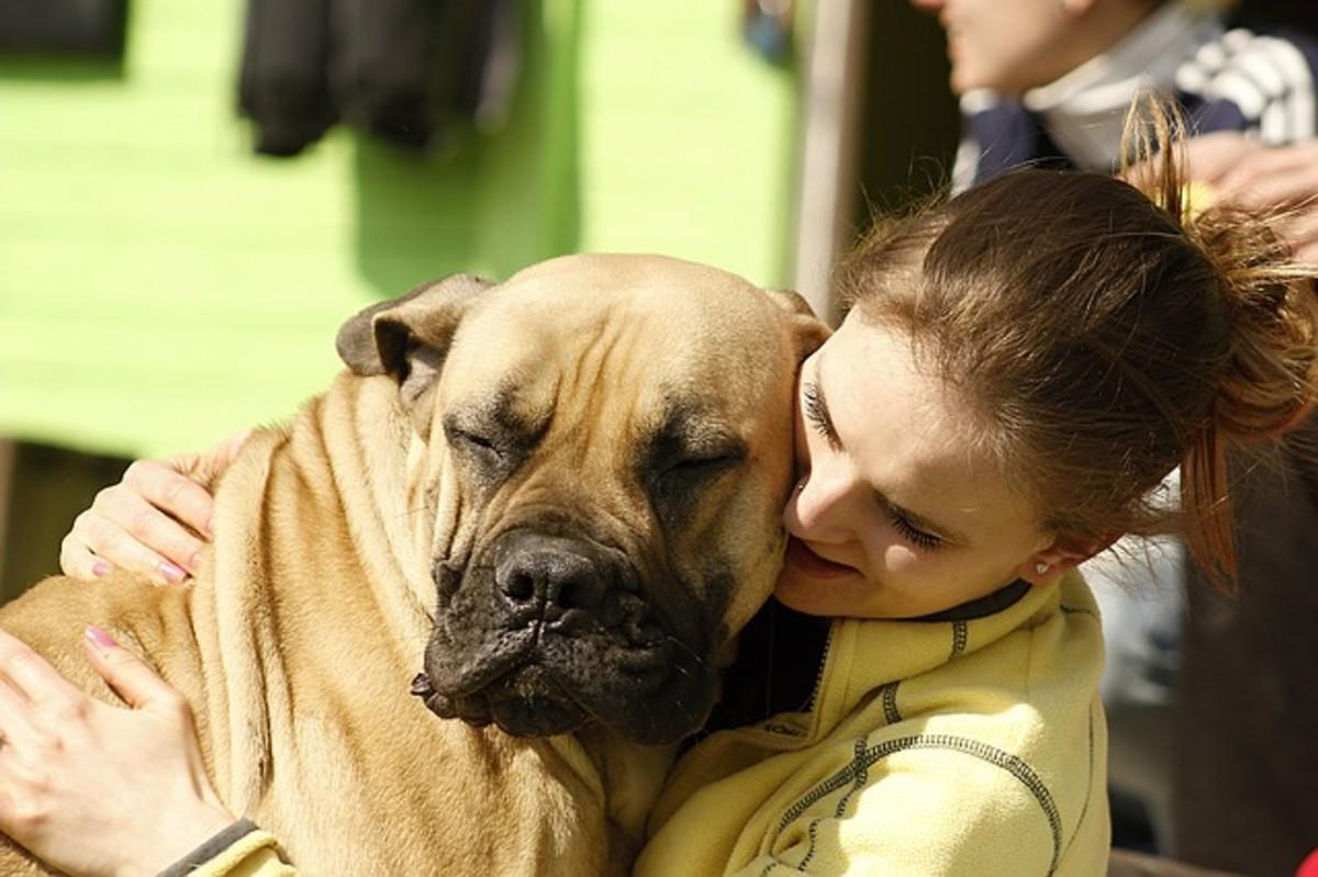 Large canine hug