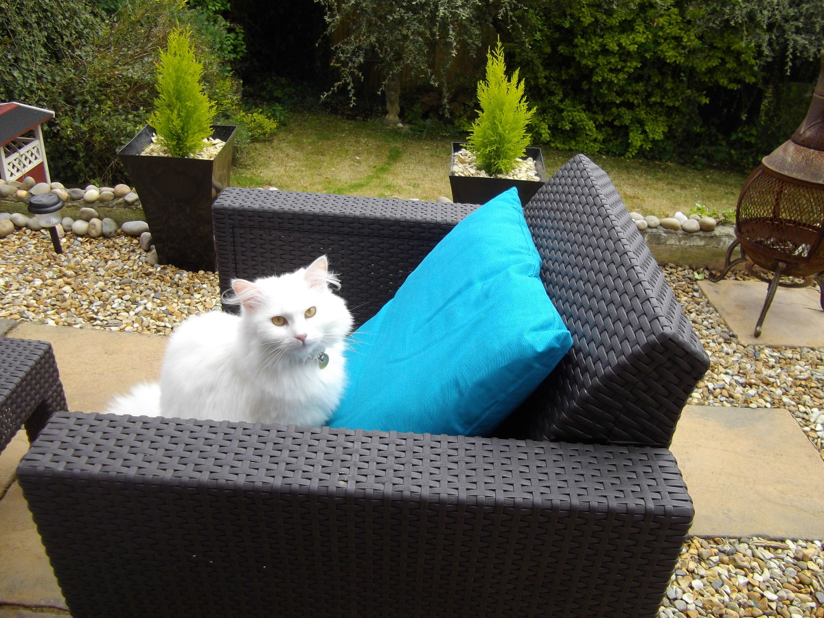 White cat sitting in a patio chair in the garden.